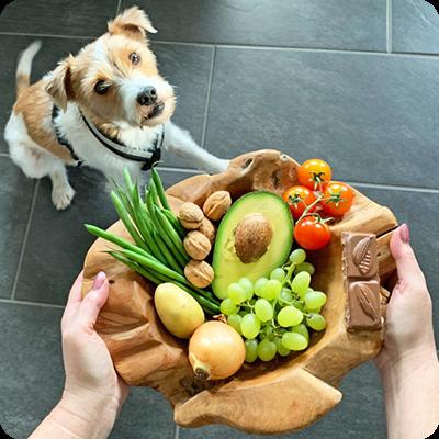 Giftige Lebensmittel Für Den Hund Swiss Natural Hundefutter Katzenfutter